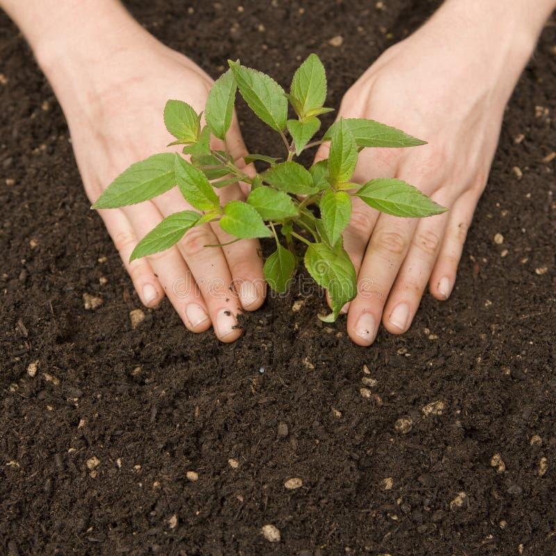 绿色植物土壤 免版税图库摄影