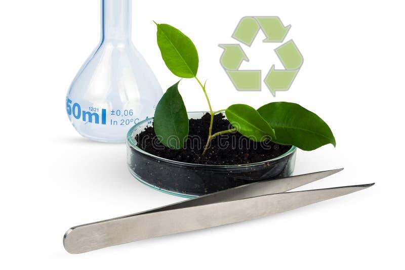绿色植物在地面和实验室玻璃器皿中生长 免版税库存照片