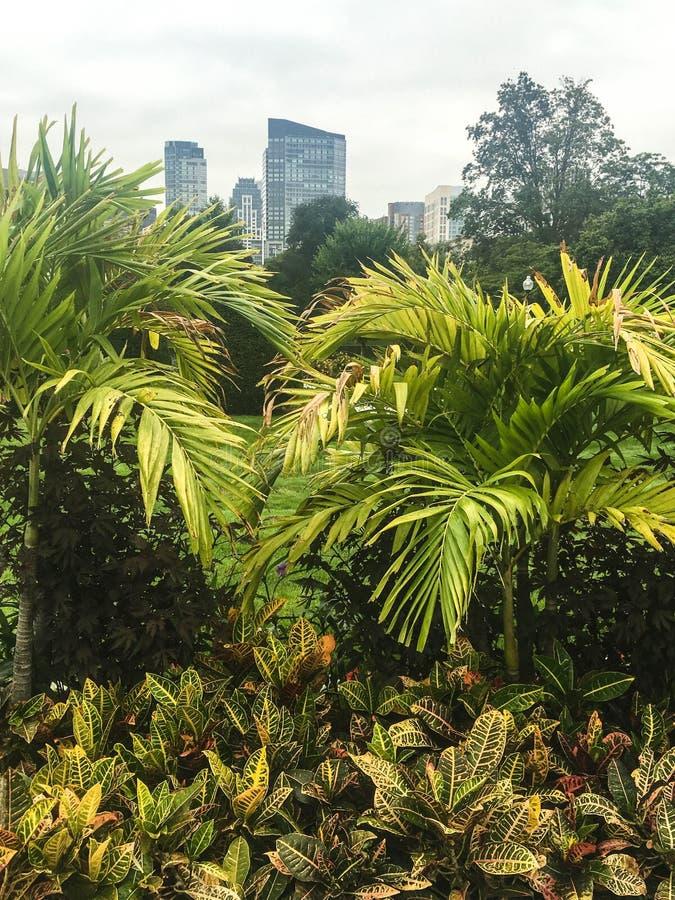 绿色植物在城市公园在背景中从事园艺有城市看法  免版税库存图片