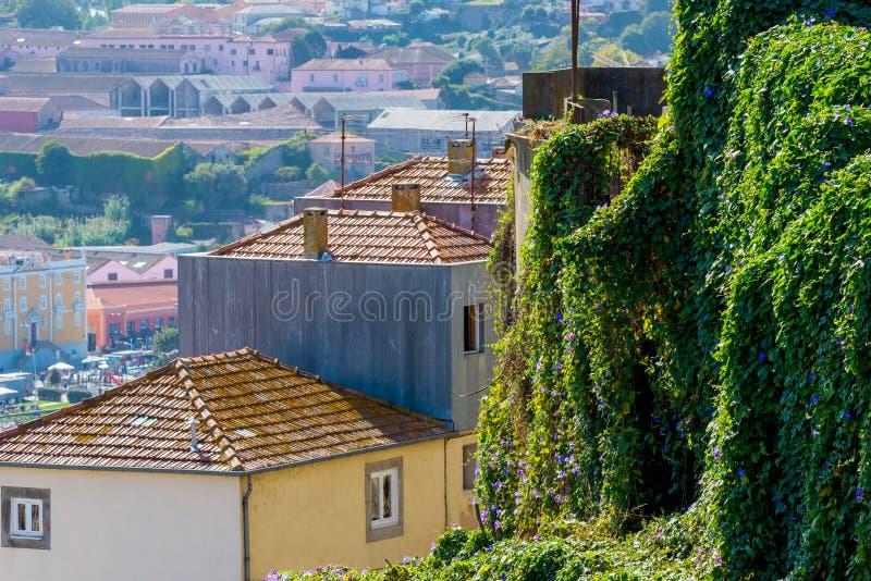 绿色植物在波尔图市,葡萄牙盖墙壁 免版税库存照片