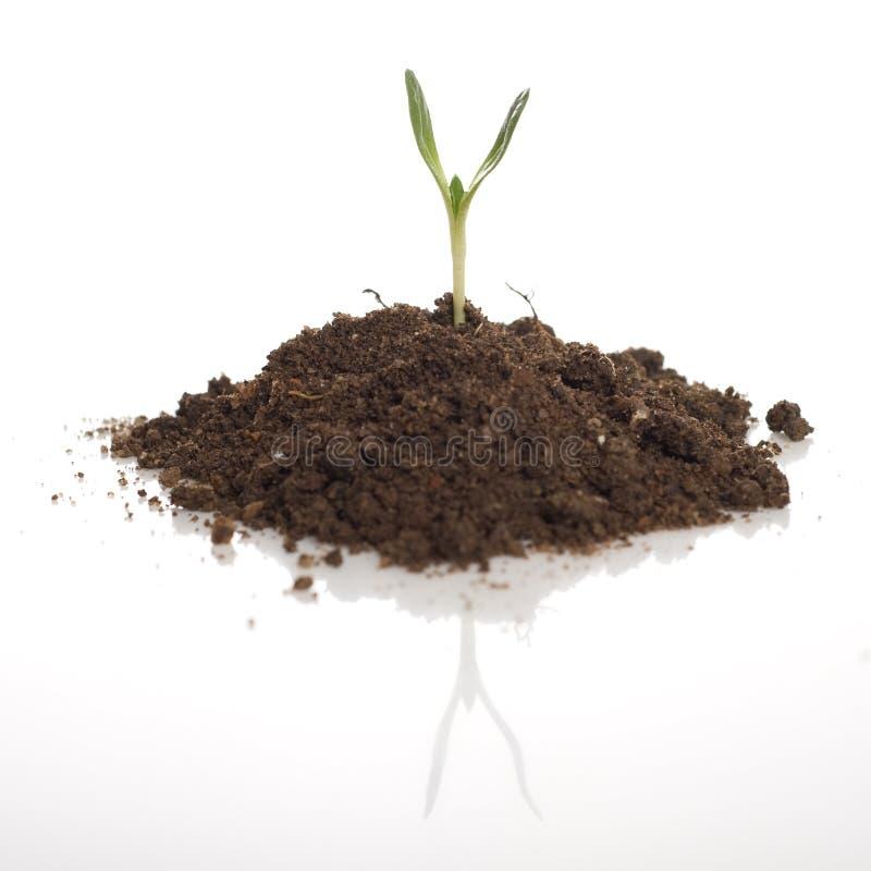 绿色植物幼木 库存照片