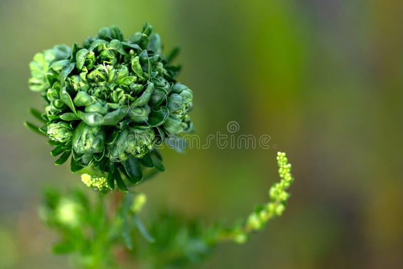 绿色植物接近的照片在软的焦点 免版税图库摄影