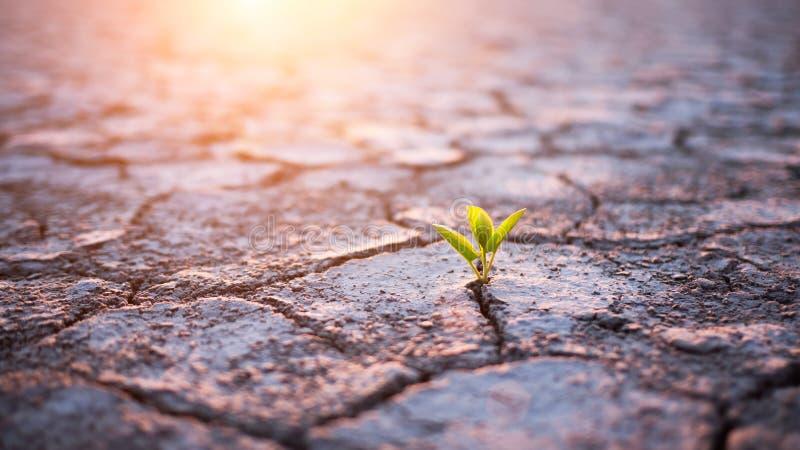 绿色植物新芽在沙漠 库存照片