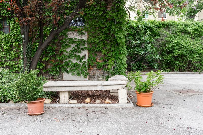 绿色植物罐 室外在夏天露台 小连栋房屋四季不断的夏天庭院 奥地利维也纳 库存图片