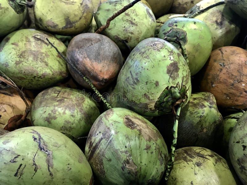 绿色椰子 图库摄影