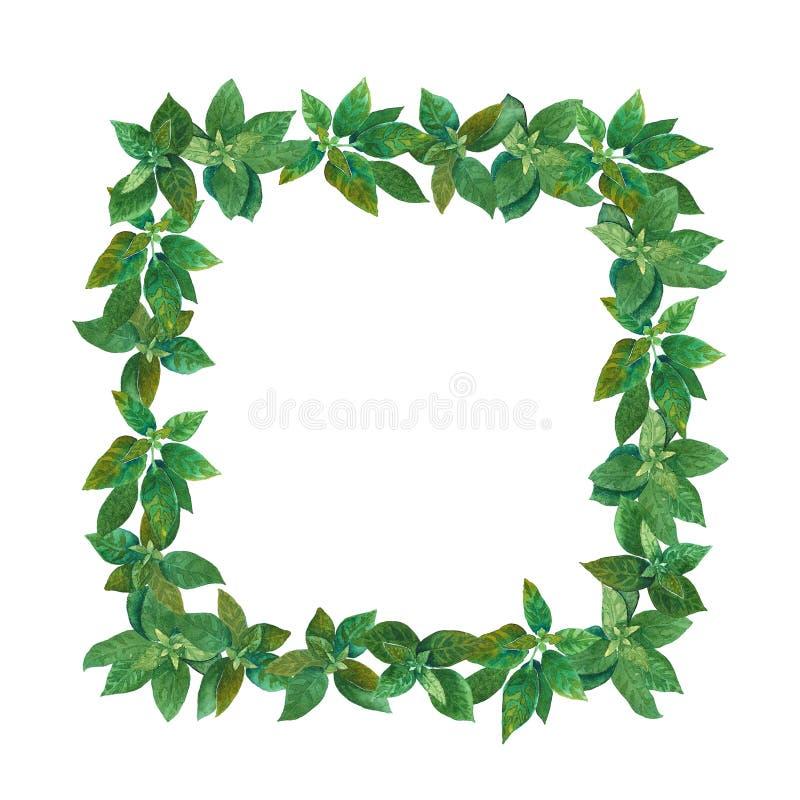 绿色水彩正方形草本框架 免版税库存图片