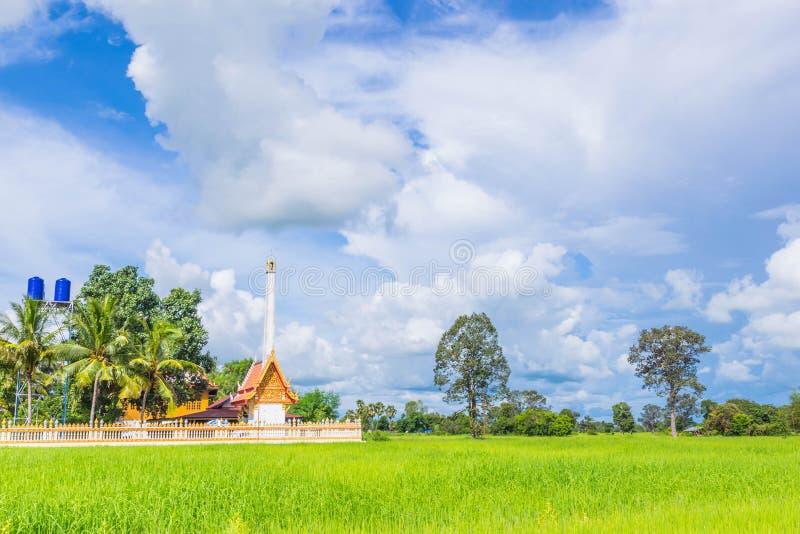 绿色水稻领域软的焦点与火葬用的柴堆、火葬场、寺庙、美丽的天空和云彩的在泰国 免版税库存图片