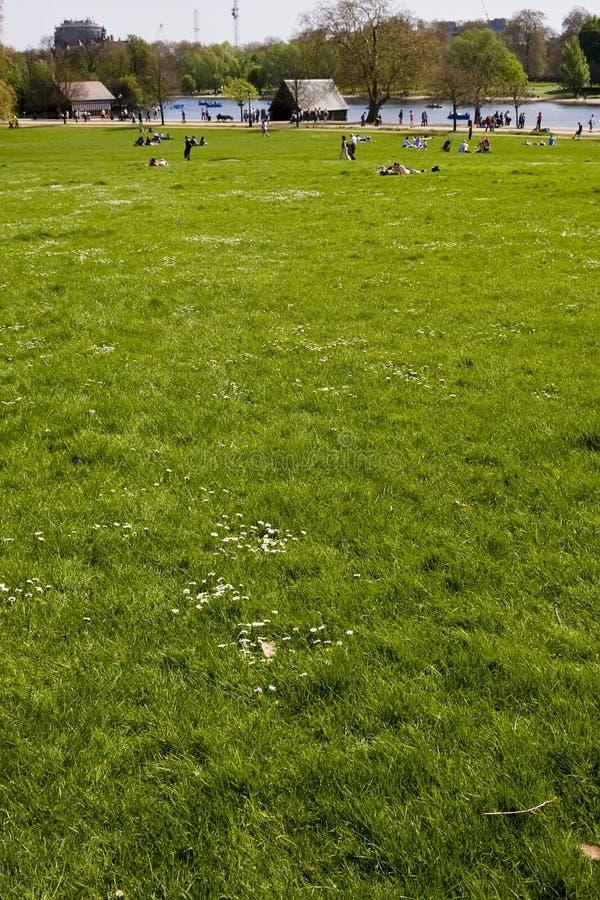 绿色海德公园无格式 库存照片