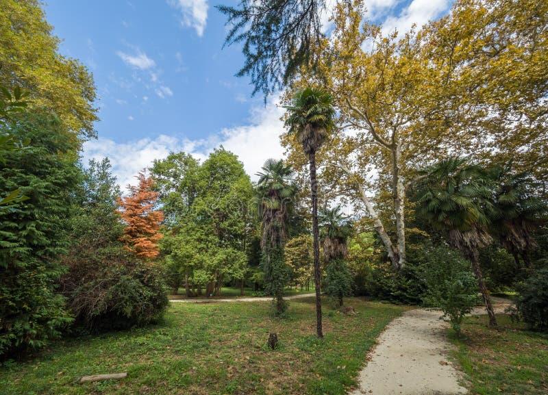 绿色灌木、树和棕榈在晴朗的天空蔚蓝的背景 库存图片