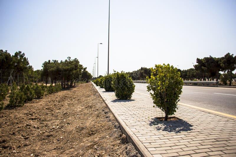 绿色灌木在白色背景离开树森林被隔绝 库存照片