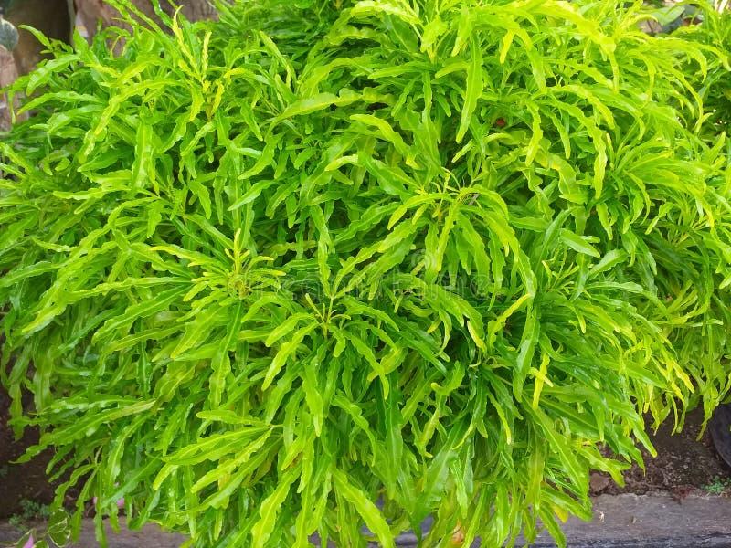 绿色灌木花 库存图片