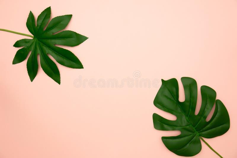 绿色热带叶子平的位置  免版税库存照片