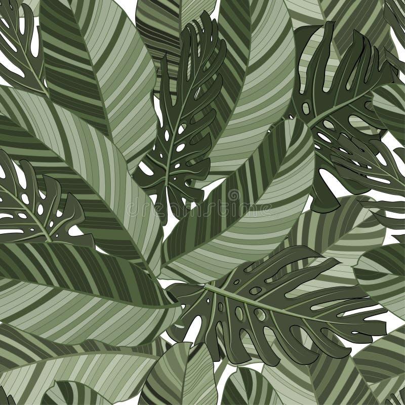 绿色热带叶子无缝的样式 也corel凹道例证向量 异乎寻常的香蕉和monstera叶子背景织品的,艺术 向量例证