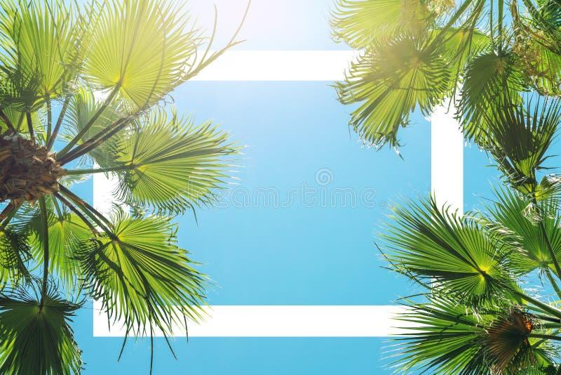 绿色热带棕榈树剪影离开与清楚的天空蔚蓝在backgroung在日落或日出时间 文本的白色框架 库存照片