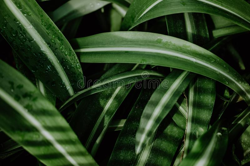 绿色热带植物特写镜头  库存照片