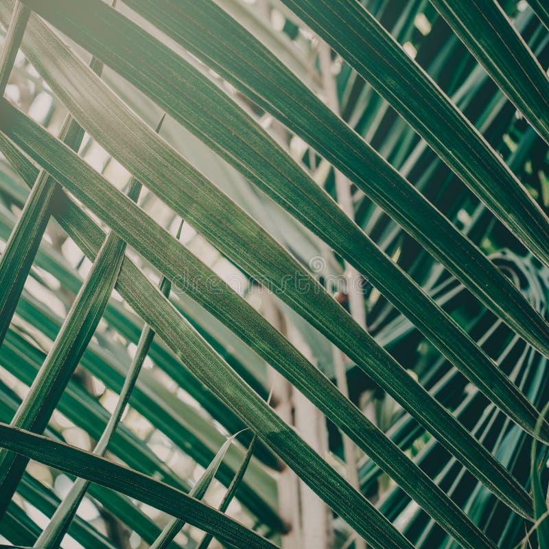 绿色热带植物特写镜头  免版税库存照片