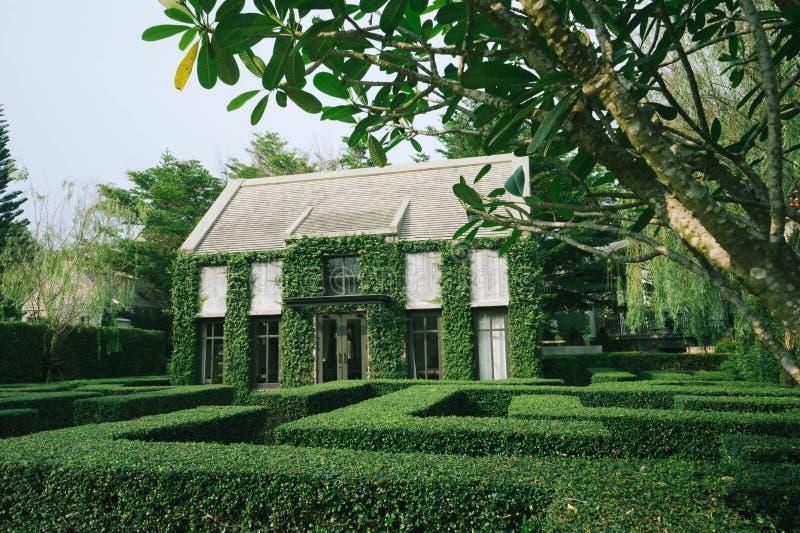 绿色爬行植物覆盖的英国乡村风格建筑的美丽装饰 库存图片