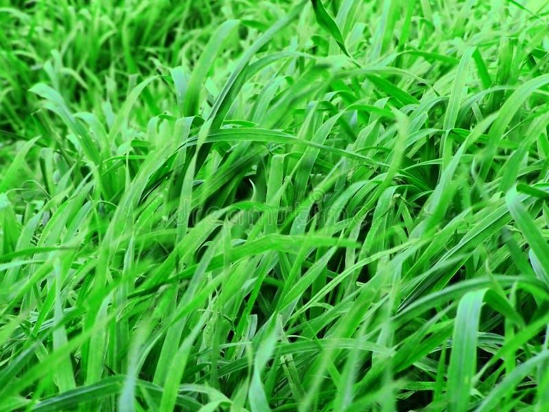 Download 绿色牧场地 库存照片. 图片 包括有 靠山, 外面, 地理, 国家(地区), 地产, 本质, 绿色, 草原, 自然 - 192656