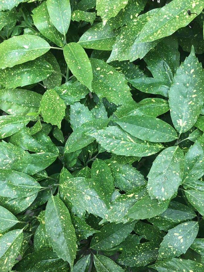 绿色特写镜头叶子,绿色,植物,植物 库存图片