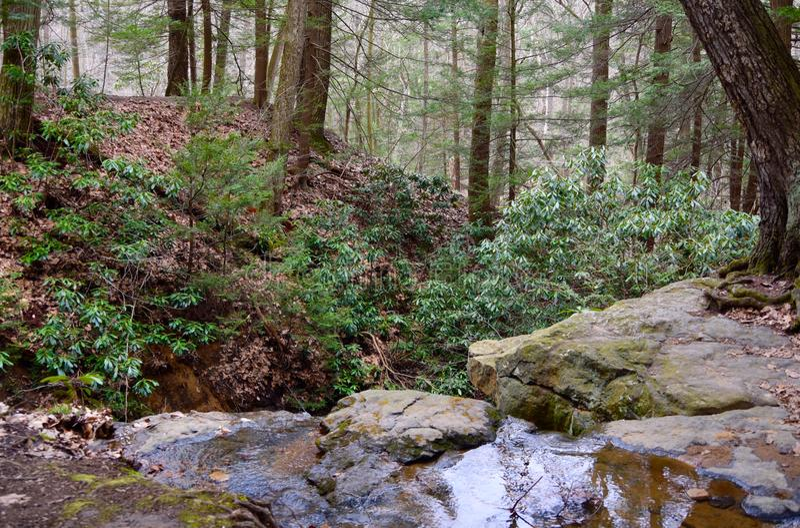 绿色狂放的杜鹃花在Linn运转状态公园附近种植线一条小小河在西宾夕法尼亚 免版税库存图片