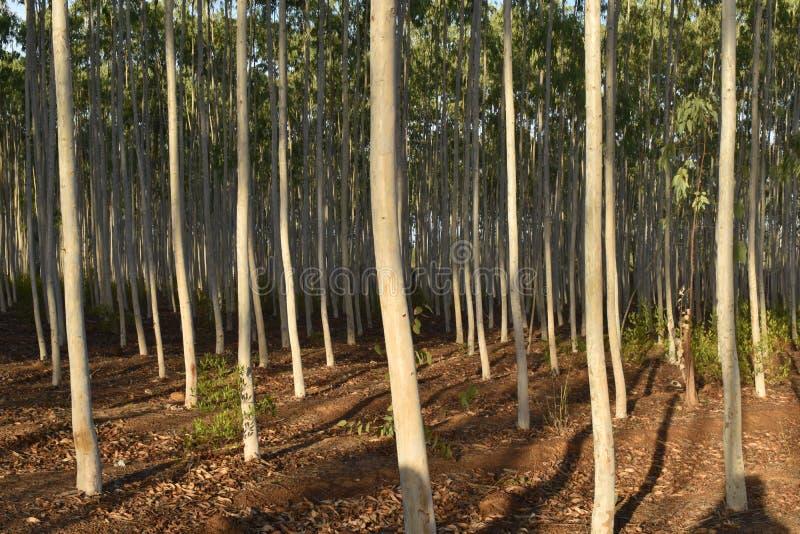 绿色玉树植物在森林里 库存图片
