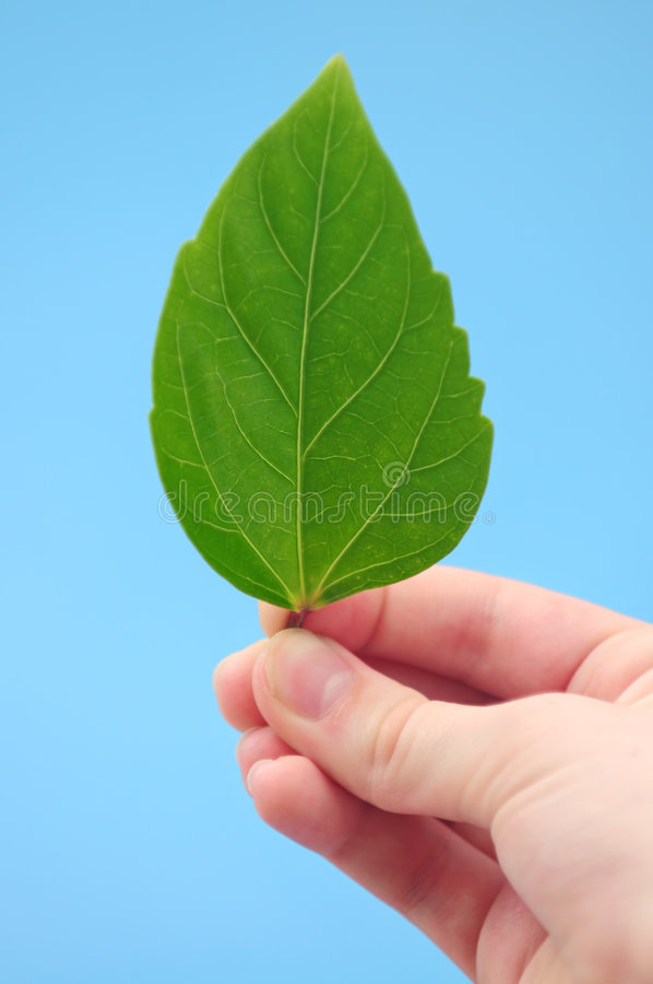 绿色现有量藏品叶子 免版税库存图片