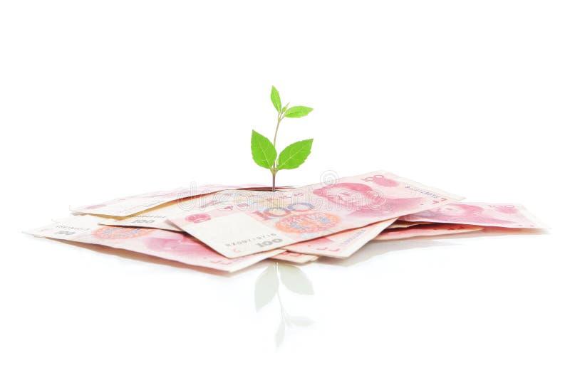 绿色生长叶子货币工厂 免版税库存图片