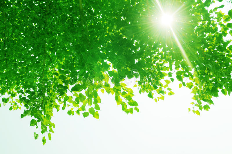 绿色留下光芒星期日 库存照片