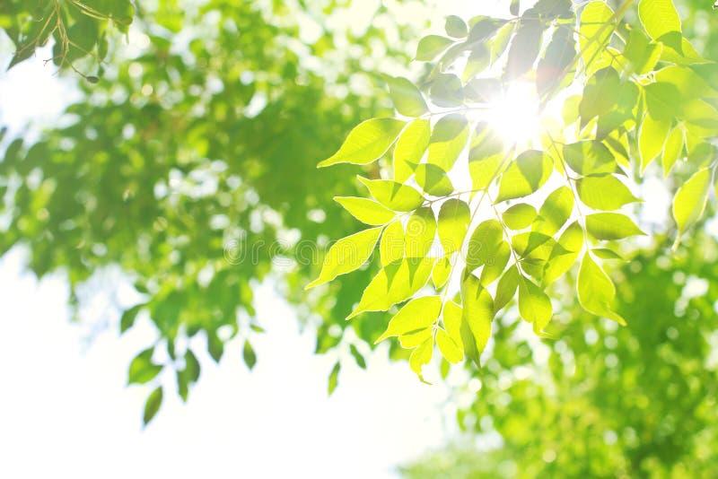 绿色留下光 库存照片