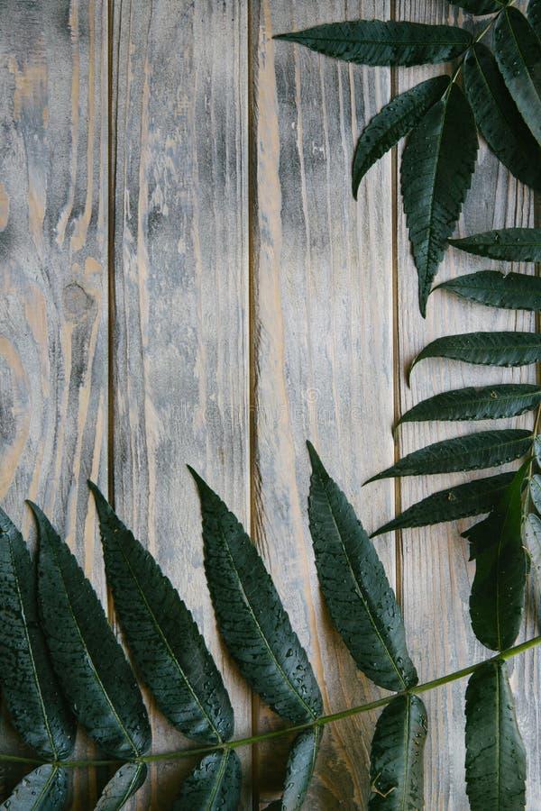 绿色留下分支困厄的木背景 免版税库存照片