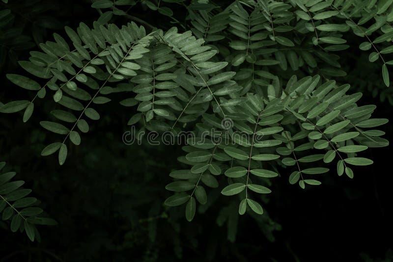 绿色留下热带密林深绿foliag的背景 免版税图库摄影