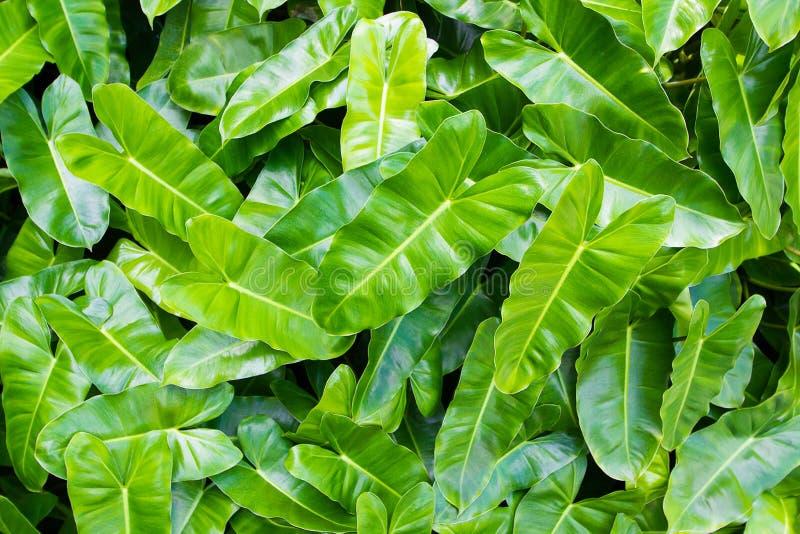 绿色留下背景或相当自然地围住纹理理想用于设计 免版税库存照片