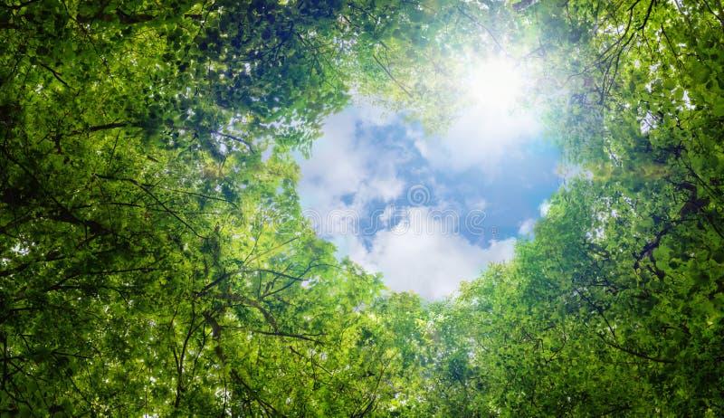 绿色留下背景,蓝天心脏形状云彩生态概念想法eco爱标志背景摘要 库存照片