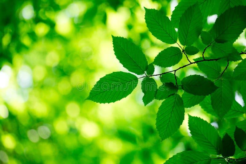 绿色留下背景 免版税图库摄影