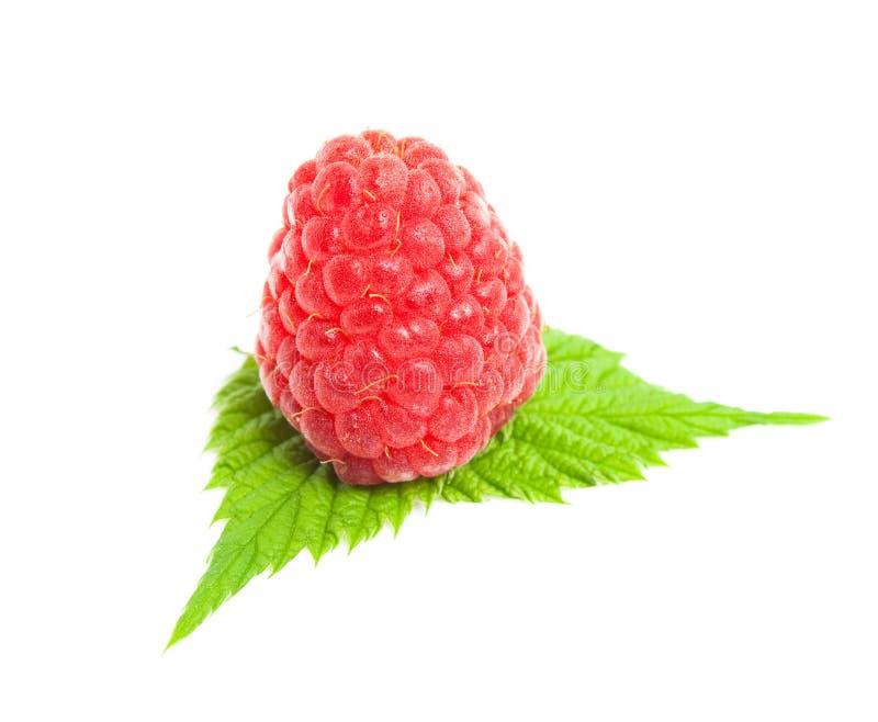 绿色留下莓 库存照片