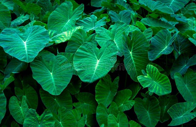 绿色留下黑背景,创造性的布局由绿色叶子制成 库存照片