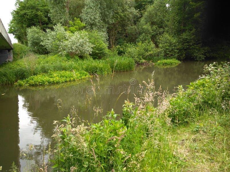 绿色的混合作为河一部分的 免版税库存图片