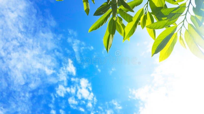 绿色离开与太阳光和蓝天云彩自然背景 免版税库存图片