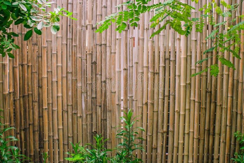 绿色离开与庭院装饰的竹墙壁背景 免版税库存图片