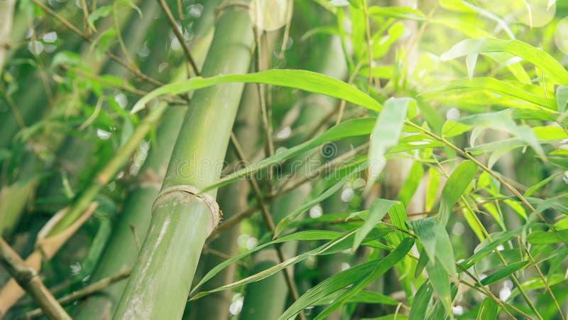 绿色竹子有森林背景和纹理 库存照片