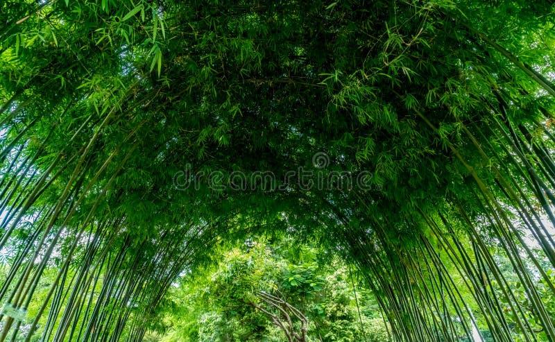 绿色竹曲拱 免版税库存图片