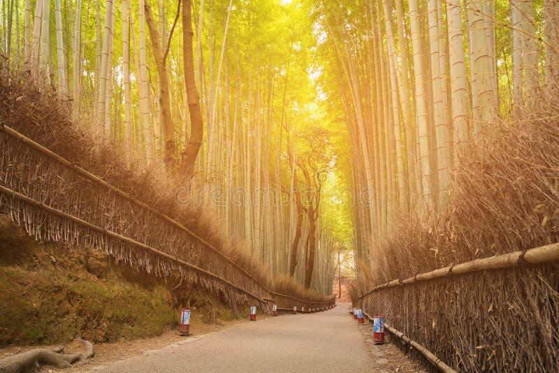 绿色竹Arashiyama的,京都,日本篱芭竹森林 库存图片