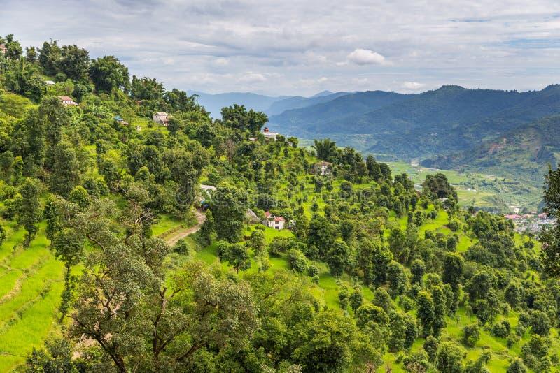绿色米在博克拉谷,尼泊尔调遣 库存图片