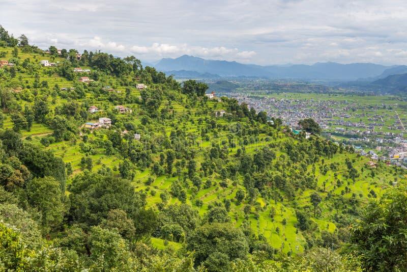绿色米在博克拉谷,尼泊尔调遣 图库摄影