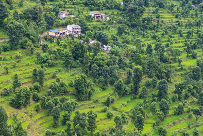 绿色米在博克拉谷,尼泊尔调遣 免版税库存图片