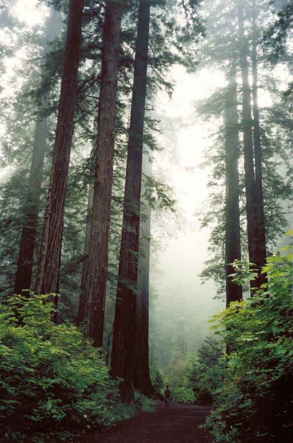绿色红色森林 免版税库存照片