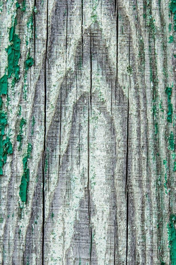 绿色纹理木头 抽象背景 免版税库存照片