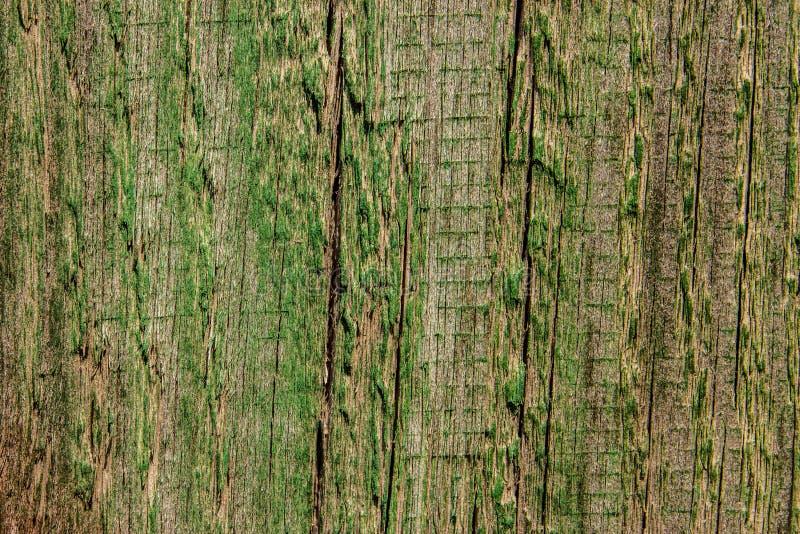 绿色纹理木头 抽象背景 库存照片