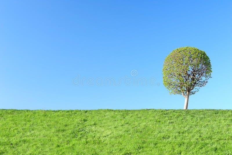 绿色结构树年轻人 免版税库存照片