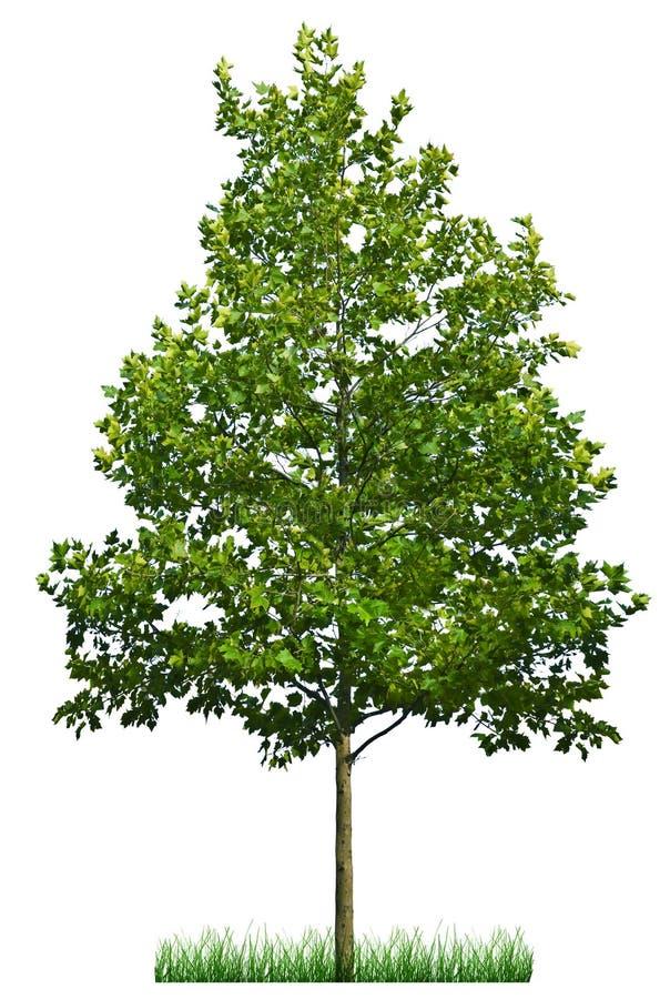 绿色结构树 向量例证
